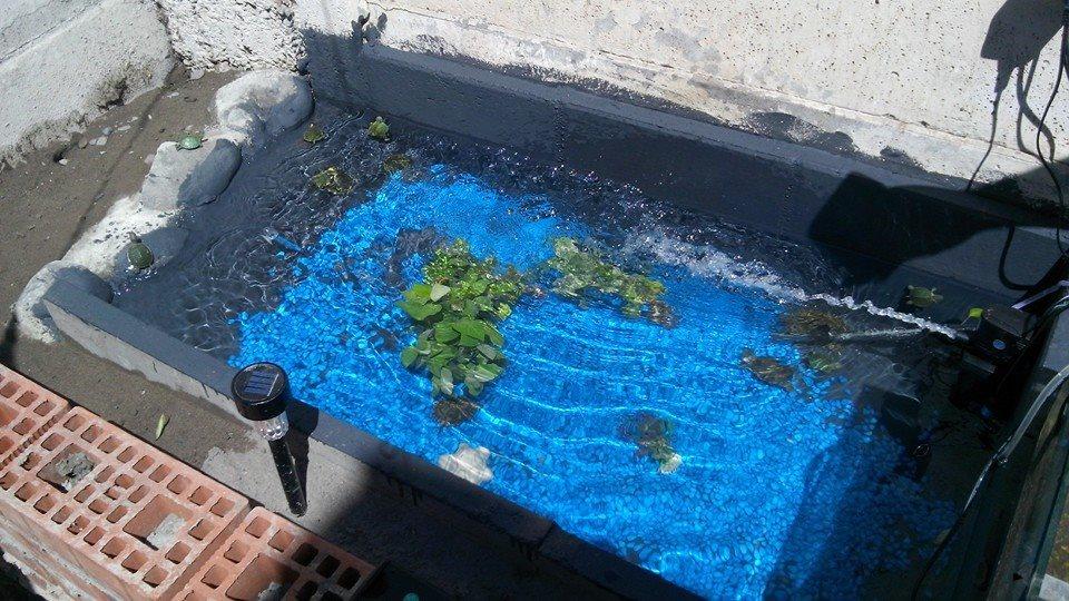 Adopto tortugas de agua mascotas en adopci n comunidad for Como construir una pileta de agua